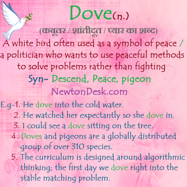 Dove – A White Bird Often Used As A Symbol of Peace