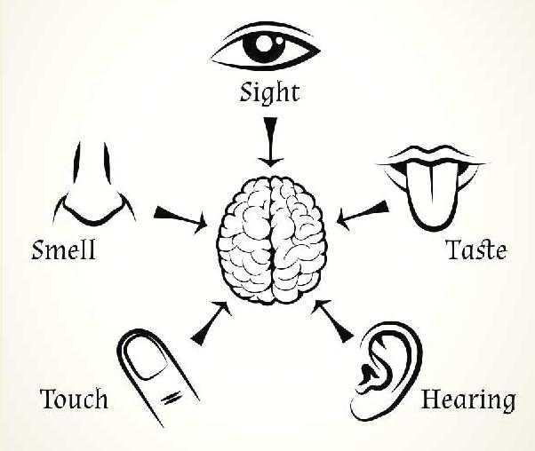 Human 5 Senses