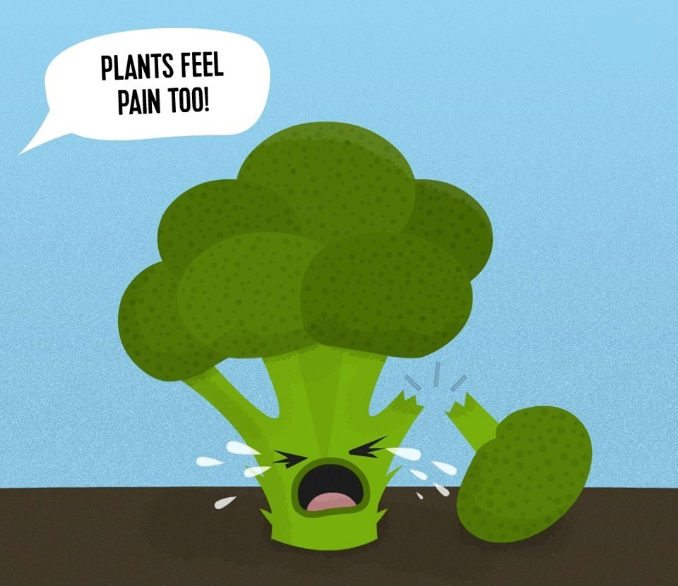 tree Plants Feel Pain