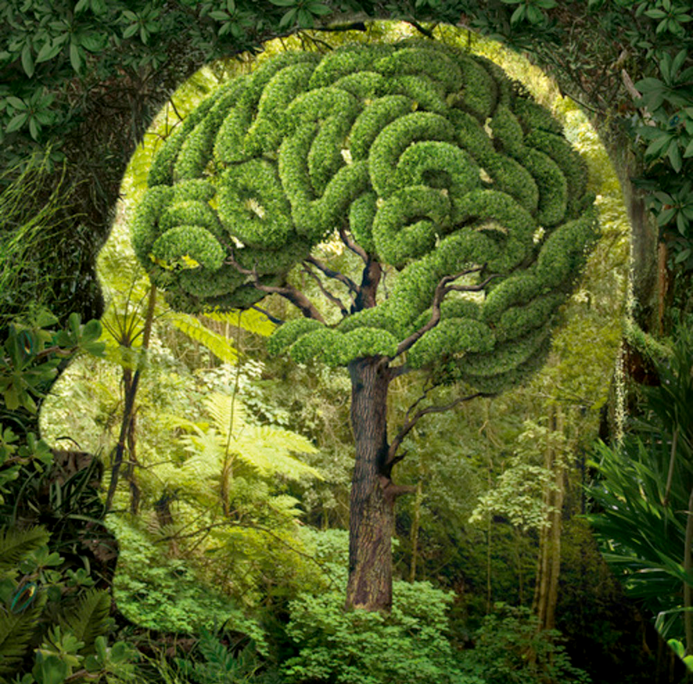 Trees memory power in brain