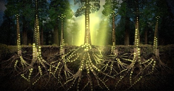 electrical impulse of trees
