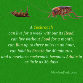 How Long Can A Cockroach Live Without A Head