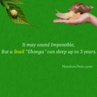 How Long Can A Snail Sleep?
