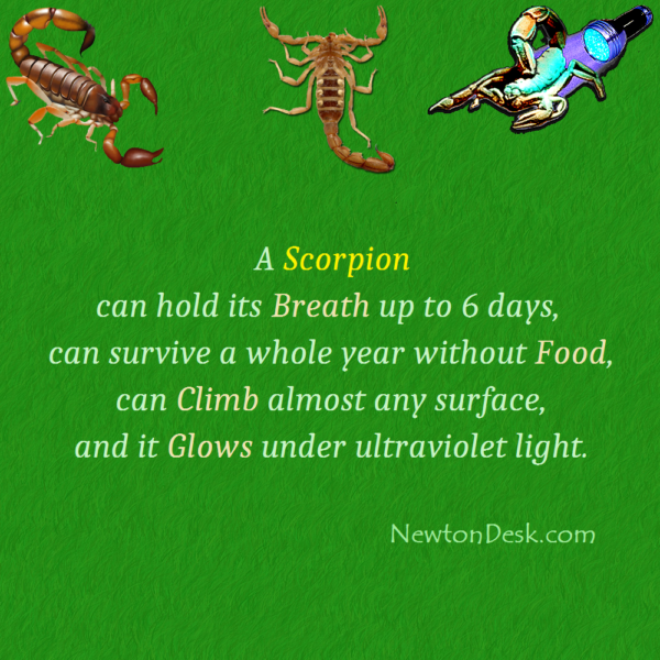 How Long Can A Scorpion Hold Its Breath?