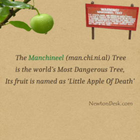 The Manchineel Tree – The Little Apple Of Death