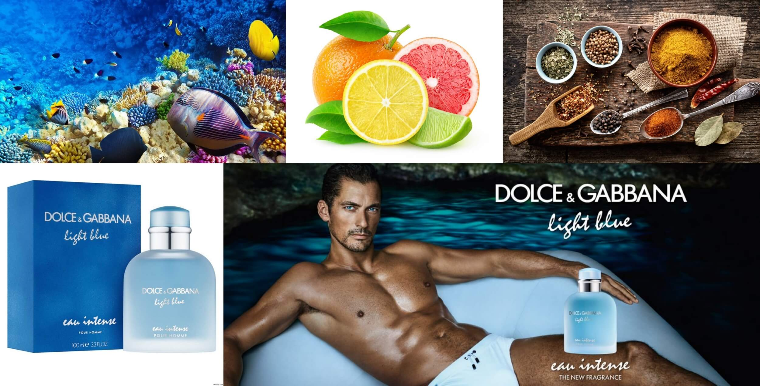 Dolce Gabbana Light Blue Eau Intense