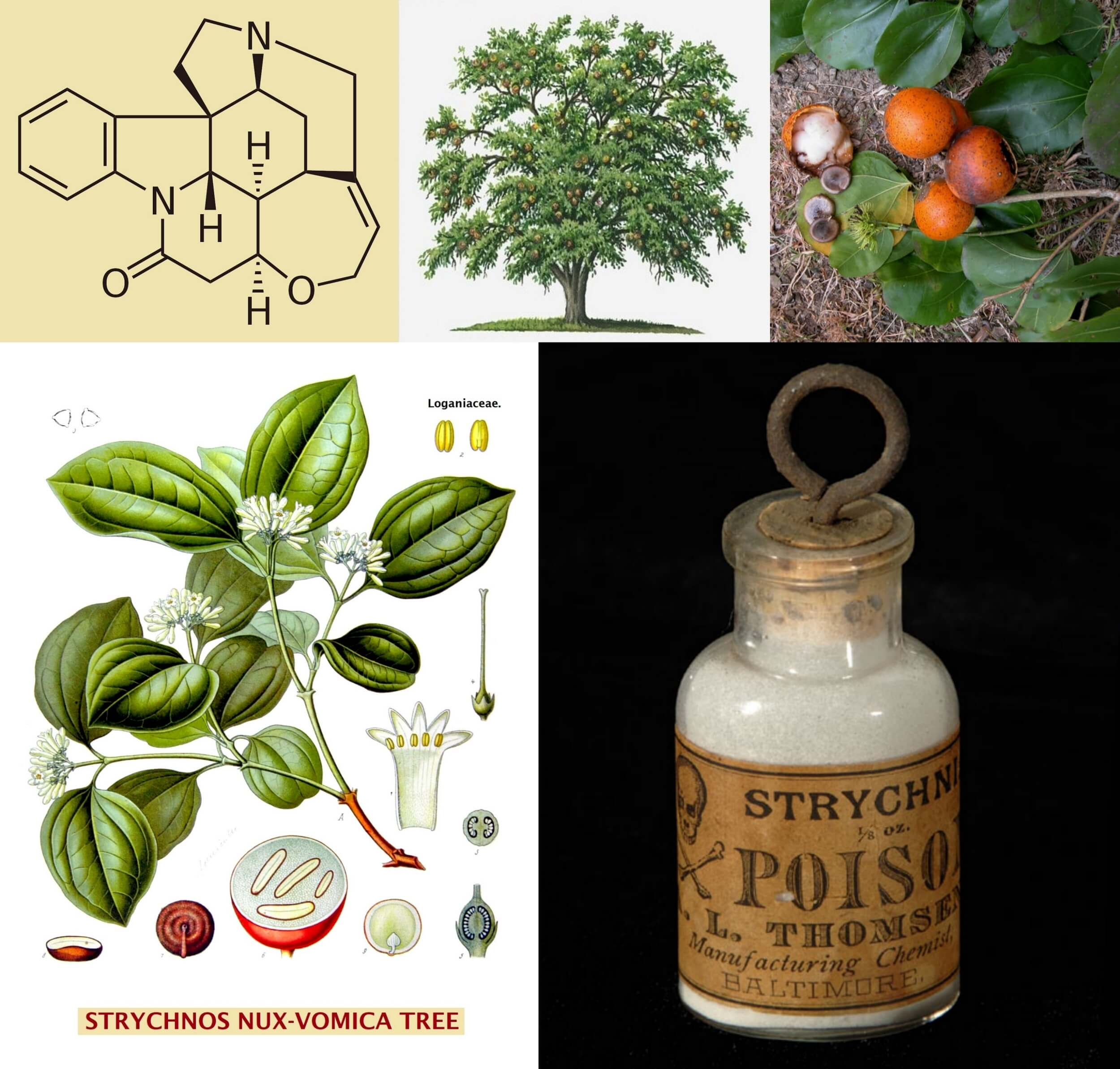 strychnine poison