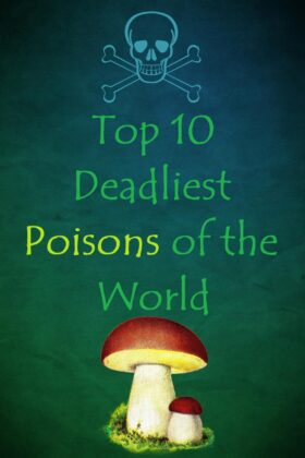 Top 10 Most Deadly Poisons of The World For Mankind