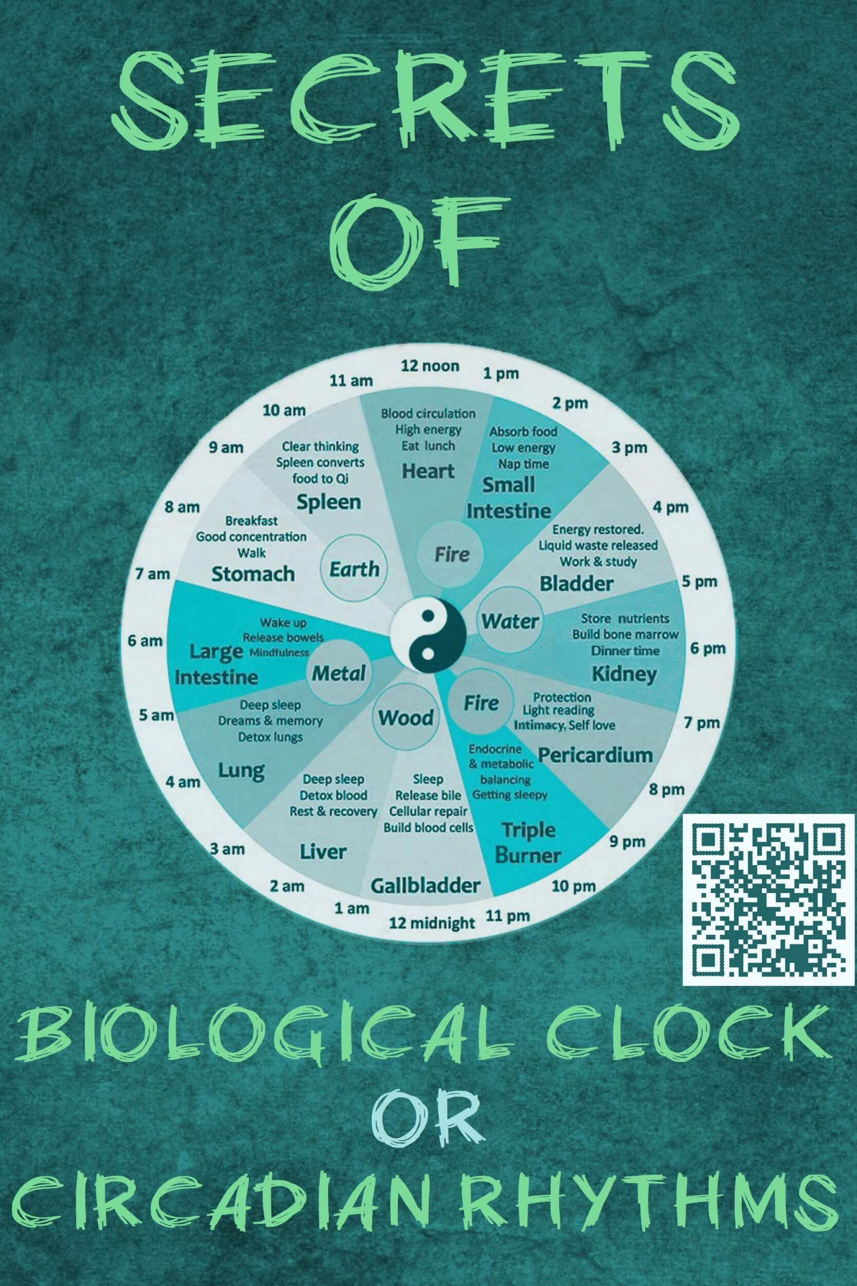 biological clock or circadian rhythms
