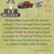 Why Human Bone (Femur) Is 4 Times Stronger Than Concrete