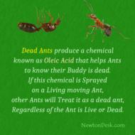 Dead Ants Produce Oleic Acid chemical