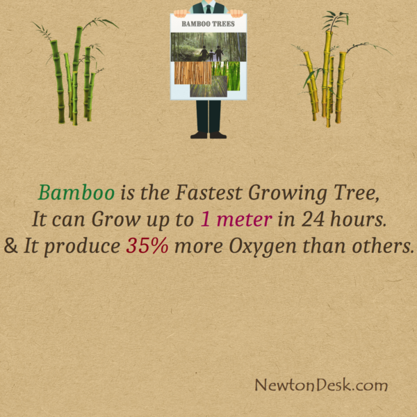 Is Bamboo The Fastest Growing Tree & Produce 35% More Oxygen