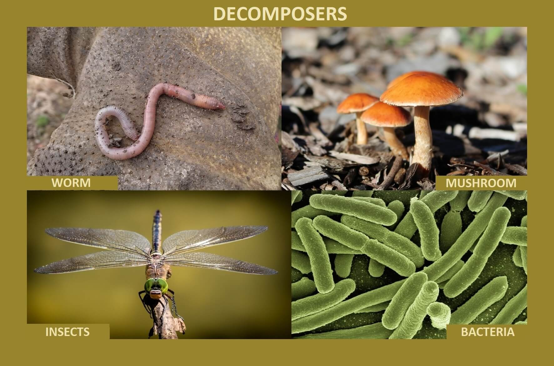 decomposers worm are insects fungi bacteria