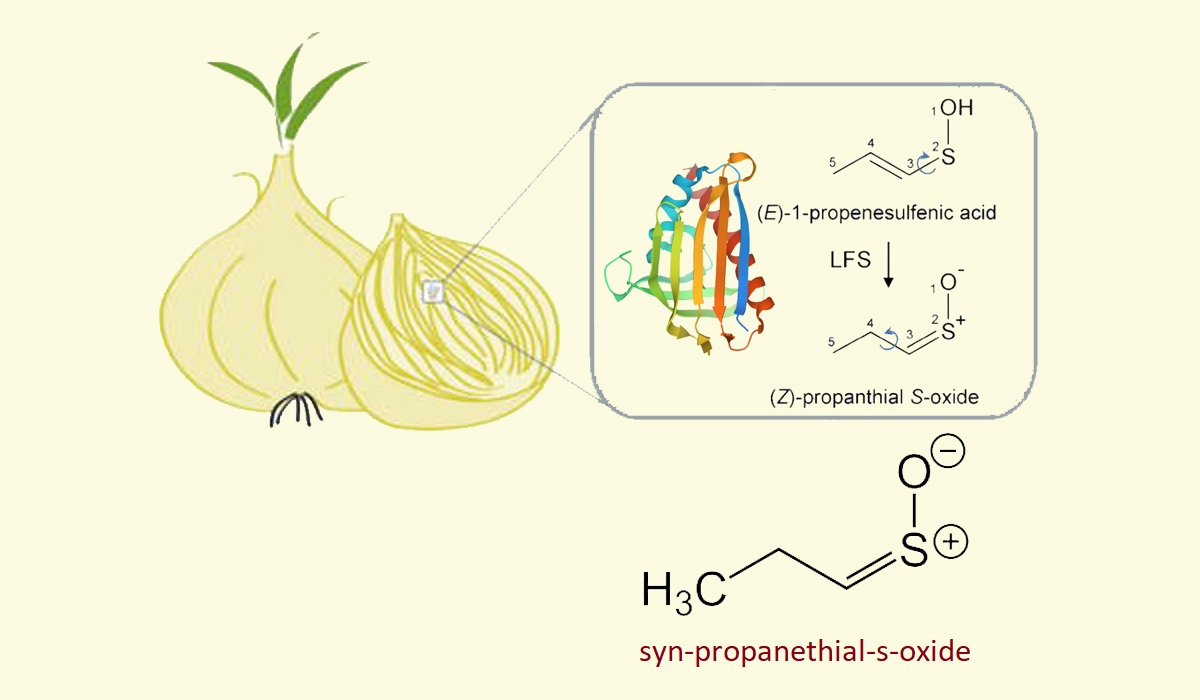 onions cry chemical syn propanethial s oxide