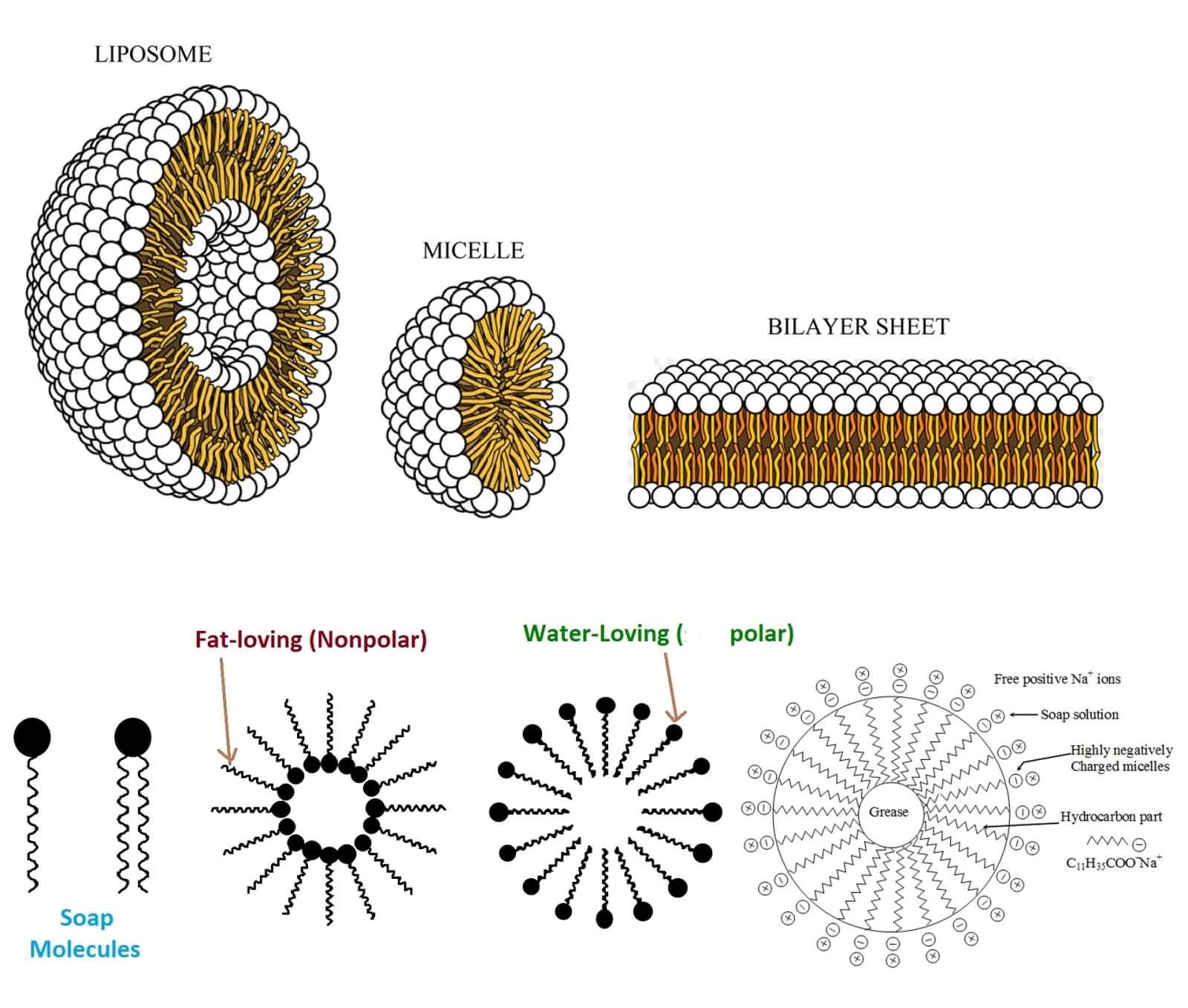micelle polar and nonpolar