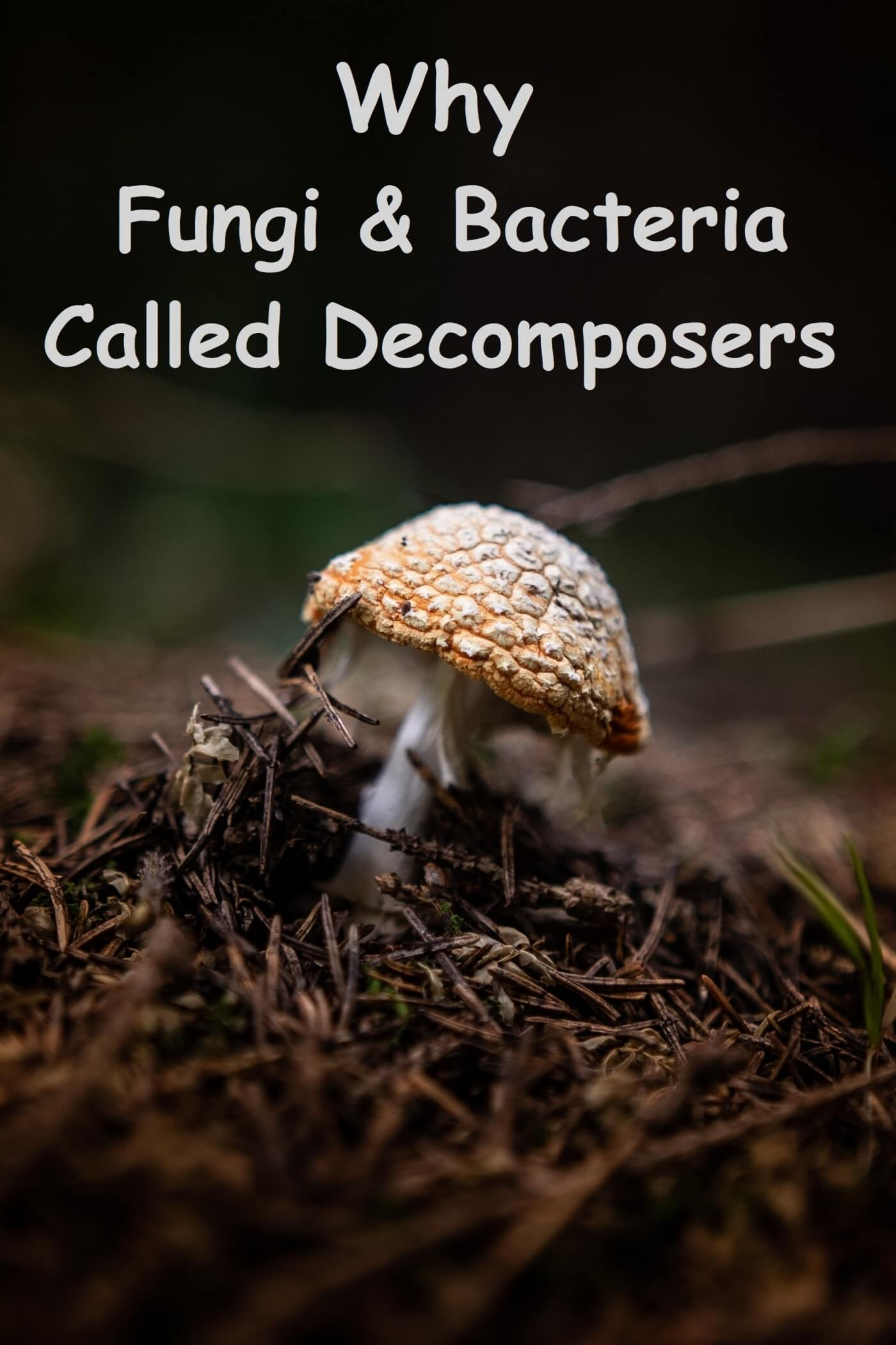 why fungi bacteria called decomposers
